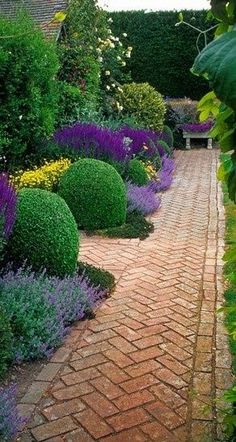 A great garden border design. Box plants, russian sage and salvia. This is a great example of the rule: pick a few plants and repeat - it creates a cohesive garden. The classic green and purple colour scheme is made brighter by the yellow, and the bold shape of the box plants provide anchors in the bed