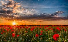 Картинки по запросу закат солнца в поле