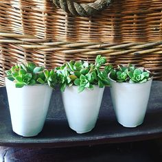 White and green , yes please for the summer months , so happy to receive these delightful ceramic Succulent planters #newstock#handthrown#ceramics#clay#pots#planters#vessels#homedecor#homedecoration #styling#interiorstyling#plants#succulents#green#outdoor#indoor#handmade#artisanal#wholesale #retail #dural #sydneyaustralia #loomware