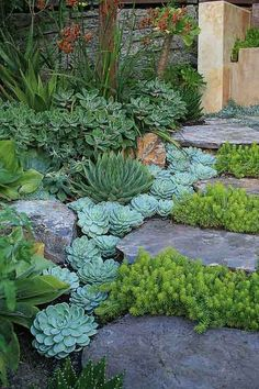 Hinterhof und Vorgarten Landschaftsbau Ideen Backyard and front yard landscaping ideas Small Front Yard Landscaping, Succulent Landscaping, Front Yard Design, Planting Succulents, Backyard Landscaping, Succulent Plants, Propagate Succulents, Succulent Rock Garden, Landscaping Design