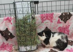 Cali Cavy Collective: a blog about all things guinea pig: Hay Solutions: Vertical hay rack