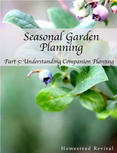 Homestead Revival: Understanding Companion Planting