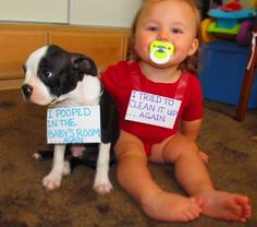 The best of dog shaming - Part 5 - Mommy Has A Potty MouthMommy Has A Potty Mouth