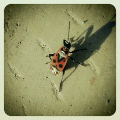 Ladybirds + beetle = my discover in mellat park