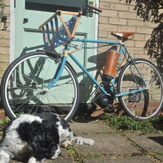 Instagram picutre by @the_davis_bike: The Davis Bike with bored milly #ebike #bicycles #electricbike #bicycle #ebikes #dog #springerspaniel #uknexttopmodel #fashion - Shop E-Bikes at ElectricBikeCity.com (Use coupon PINTEREST for 10% off!)