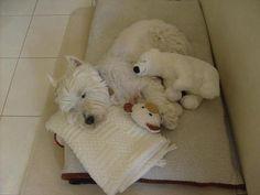Lola at rest