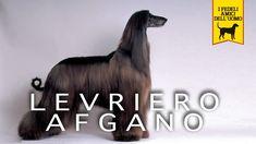 LEVRIERE AFGANO trailer documentario