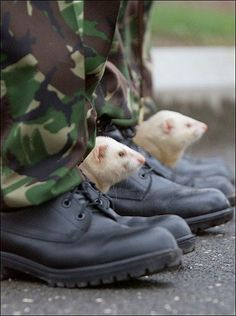 Now this would be a reason to join the army :-) ferret mascot http://www.pinterest.com/pin/254946028880682919/