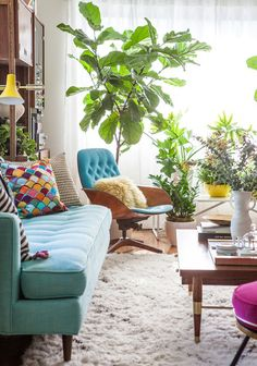 living room with turquoise couch and fiddle leaf fig