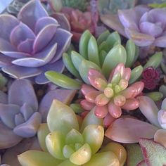 I'm such a fan of this #succulents #plants