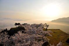 竹田城跡の桜(兵庫県朝来市) #TakedaCastle Ruins #CherryBlossoms #Sakura #Asago City Hyogo