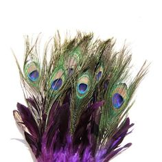 ... Pictures feathers s native