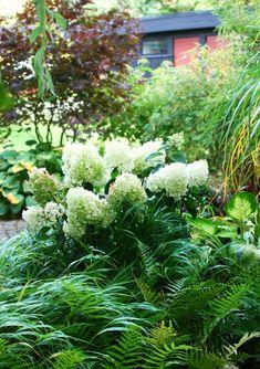 syrenhortensian 'Silver Dollar' (Hydrangea Paniculata 'Silver Dollar') Kraftigt grenverk i en mörkröd nyans, kompakt upprätt växtsätt (ca 1,5 m) och med sagolikt vackra blommor. Backyard Garden Design, Garden Landscaping, Back Gardens, Outdoor Gardens, Stipa, Shade Garden Plants, Hydrangea Paniculata, Garden Stairs, Small Outdoor Spaces