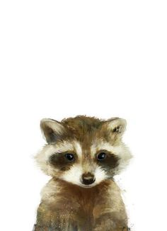 Little Raccoon als Leinwandbild von Amy Hamilton | JUNIQE