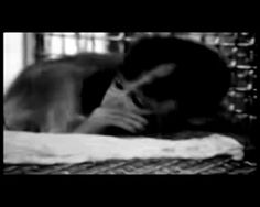 Siya siyabend - Maymunlar Cehennemi