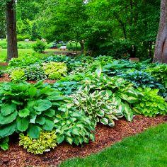 Greensboro arboretum hosta garden.