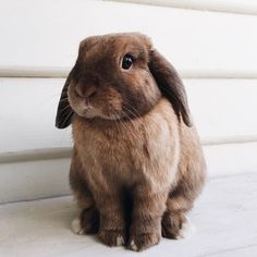 In the event you are looking for a furry friend that is not just extremely cute, but simple to have, then look no further than a family pet bunny. Cute Baby Bunnies, Cute Baby Animals, Animals And Pets, Cute Creatures, Beautiful Creatures, Animals Beautiful, Photo Chat, Tier Fotos, Fur Babies