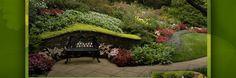 Magnolia Grandiflora Little Gem Yard And Garden Ideas