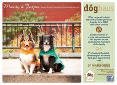 Monty & Jasper 2013 Calendar, Jasper, Pets, Photography, Photograph, Fotografie, Photoshoot, Animals And Pets, Fotografia
