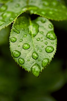 Your Standard Droplets by Kevin Davila on Photography Ideas At Home, Leaf Photography, Creative Photography, Levitation Photography, Exposure Photography, Abstract Photography, Natural Form Art, Water Art, Dew Drops
