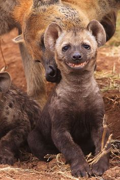 If you don't have a smile on your face now, you will after looking at this collection of the 30 happiest animals ever, all grinning joyfully from ear to ear. These smiling animals, that look cheerful, sweet, or just plain goofy, are bound to turn around even the gloomiest of days. However, as cute as …