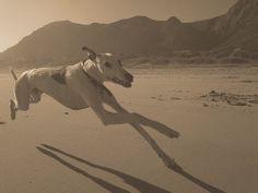 Misha sprint | Flickr: partage de photos!