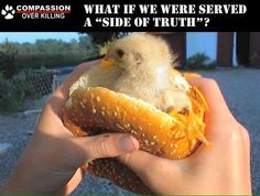 what if you were served a side of truth #vegan crueltyfree ethical healthier lifestyle