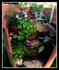 broken pottery gardens | These broken pot fairy gardens are all the rage. And this is a great ...