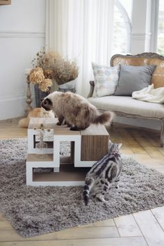Cat Coffee Table!