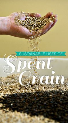 Sustainable Uses of Spent Grain