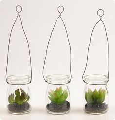 Hanging Mini Succulent Jars from World Market