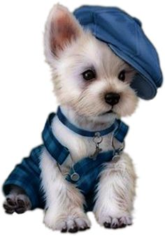 Animals And Pets, Baby Animals, Cute Animals, Yorky Terrier, Cute Puppies, Dogs And Puppies, Animal Pictures, Cute Pictures, Animal Wallpaper