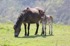 Mother and Foal | Flickr - Photo Sharing!