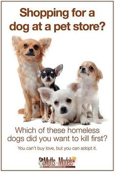 Approx 38 pets a min are killed in shelters. For the most part people are ignorantly innocent and have no idea where puppies in pet stores come from. A recent survey showed that 78% of Americans have no idea where puppies in pet stores come from. Its time to EDUCATE people and change those statistics!