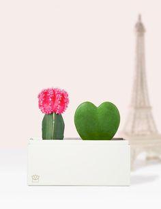 'I LOVE ...' Garden Hoya Plants, Best Valentine's Day Gifts, Valentines Day Gifts For Her, Love Garden, Planter Boxes, Succulents Garden, Cupid, Little Gifts, Flower Power