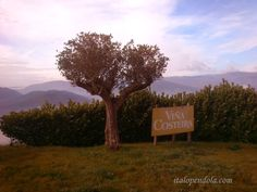 Visiting Viña Costeira vineyards
