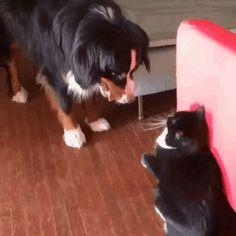 Pero que lindura de gatitoooo Here is such a strange love between a cat and a dog
