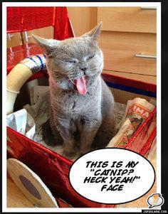Catnip? Heck Yeah! :D
