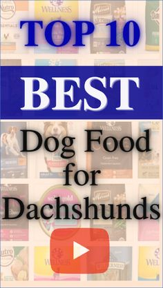 Dogs food.The Dachshund is a small-breed dog known for his long body and short legs as well as his friendly personality and floppy ears.Small breeds have their own special requirements.Here is the list of top 10 best dog food for Dachshunds.Follow us for more review videos,UPDATED RANKING MONTHLY! #healthy foods for dogs#dogs food#funny dachshund quotes#dachshund quotes#corgi puppies#dachshund funny humor#dachshund funny Dachshund Quotes, Funny Dachshund, Dachshunds, Small Dog Breeds, Small Breed, Best Dog Food Brands, Corgi Puppies, Short Legs, Food Humor