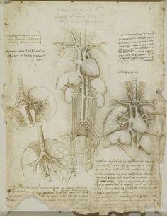 estudios sobre el corazon, pulmones, higado, bazo 1508