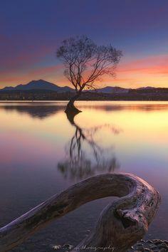 ˈw ɒ n ə k ə - lake wanaka - n z. Bible Verse Decor, Lake Wanaka, Auckland New Zealand, The Beautiful Country, Photos Of The Week, Science Nature, Landscape Photography, Travel Photography, Tourism