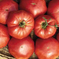 Tomato, Brandywine (Sudduth's Strain) Catalog #0427 (Solanum lycopersicum) (aka Pink Brandywine) This strain was obtained by tomato collecto...