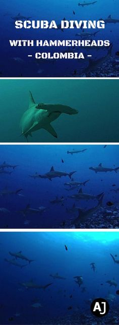 Once in a Lifetime Experience. Scuba Diving With Hundreds of Hammerhead Sharks in Malpelo Island, Colombia.