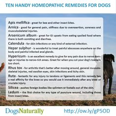 Ten Handy Homeopathic Remedies For Dogs (probably works for humans too - check it out first)
