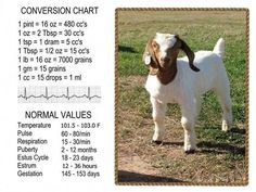 How To Raise Goats: Natural Goat Care for Meat, Milk and Profits in Your Backyard - Tools And Tricks Club Goat Playground, Goat Shelter, Show Goats, Goat House, Raising Goats, Feeding Goats, Goat Barn, Boer Goats, Nigerian Dwarf Goats