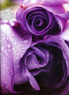 i dream of purple roses