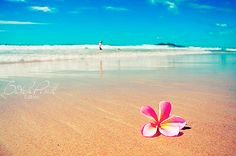 Plumeria flowers. One of my most favorite scents in the entire world. I miss #hawaii