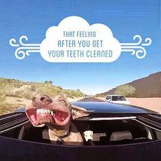 That feeling after you get your teeth cleaned. #DentalHygienist #DentalHygiene #RDH www.Hygienetown.com @Hygienetown