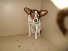ADOPTED!!! CODY...FOUND IN LORAIN COUNTY OHIO... https://www.petfinder.com/petdetail/30993729/