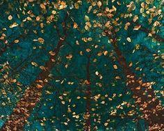 Platoa s Trees Poster Print by Lars Van de Goor | Fruugo